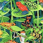 Rain Forest Frogs Bedding & Accessories